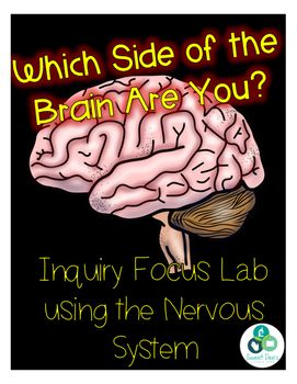 Nervous System Brain Lab | Sweet Dee's TpT Products | Human