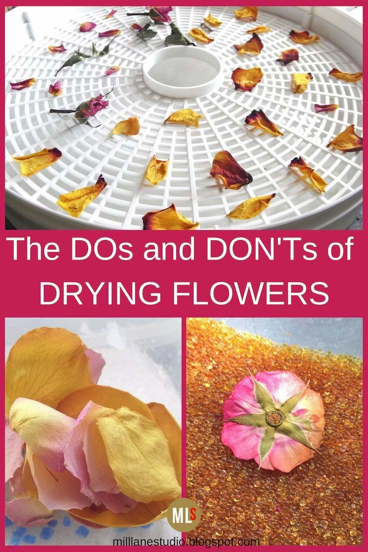 Photo of Drying and Preserving Flowers for Resin