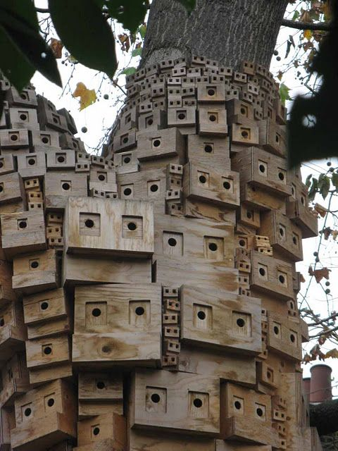 Close up of tree houses in London  Looks like a lot of eyes looking at you!