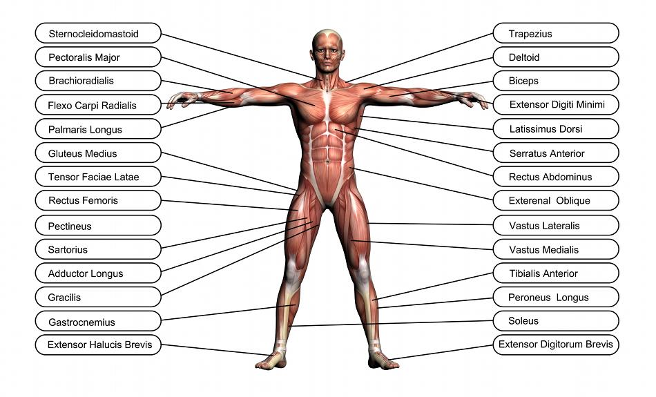 Résultats Google Recherche d\'images correspondant à http://www.keana ...