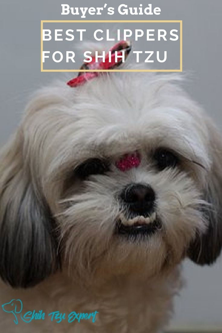 Best dog clippers for shih tzu buyers guide and reviews