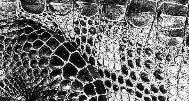 Skin Pattern Crocodile Texture Art Crocodile Skin Texture