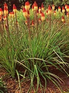 plantes vivaces hautes , Résultats Yahoo France de la recherche d\u0027images