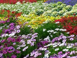 Resultado de imagen de colourful gardens