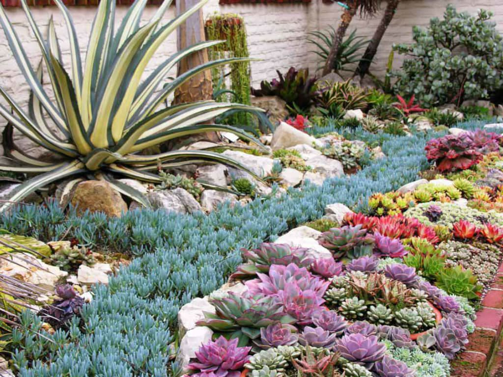 How Succulents Can Solve Your Garden Problems is part of lawn Maintenance Drought Tolerant - Succulents can be effective problem solvers, replacing a waterintensive lawn with a more droughttolerant landscape, filling narrow planting areas, creating lowmaintenance container plantings, and much more  Before planting succulents, it is important to know a few things  There are many kinds