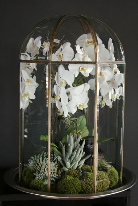 The Urban Grow Terrarium Orchidea Terrario Vasi Da Giardino