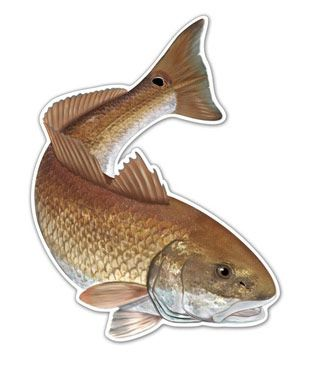 Red fish salty bones redfish sticker southeastern for Fishing tackle liquidation