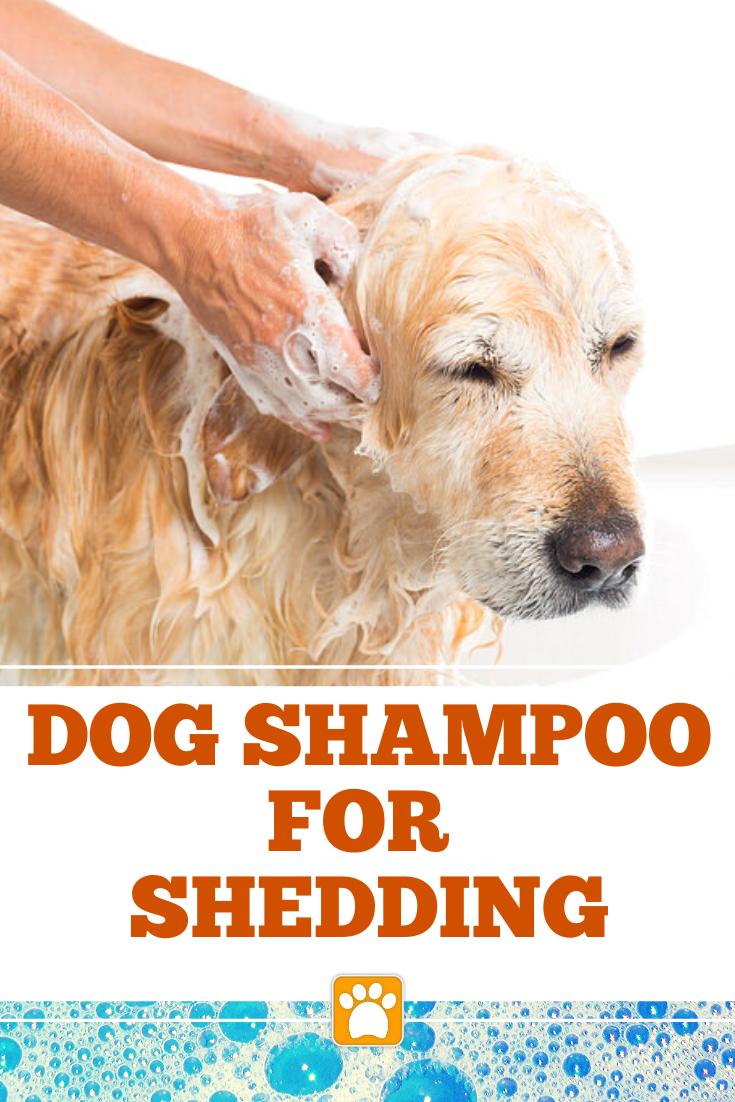 Best Deshedding Shampoo For Dogs Dog Shampoo Best Dog Shampoo Dogs