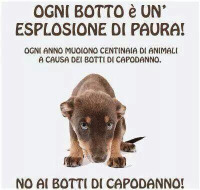 #Noaibotti #No  #Botti #Capodanno
