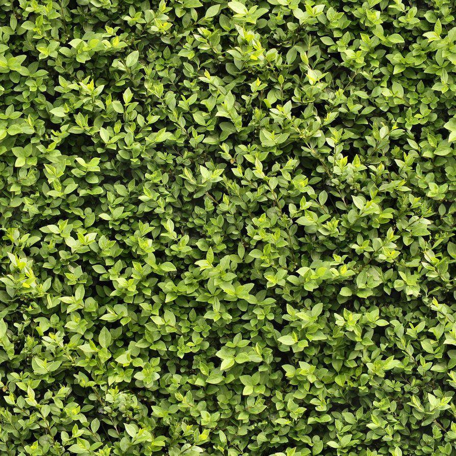 Seamless Hedge Texture By Hhh316 On Deviantart Grass Textures Plant Texture Green Texture