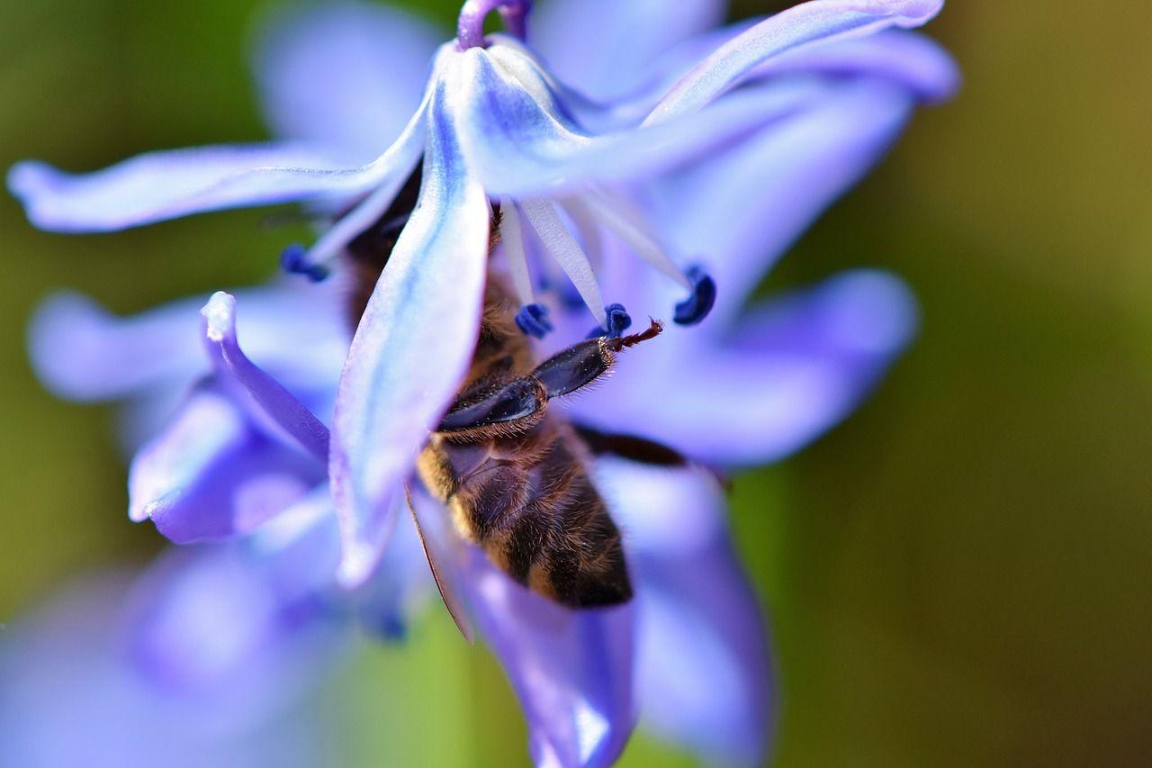 Keeping Bees and Beekeeping in 2020 Bee keeping