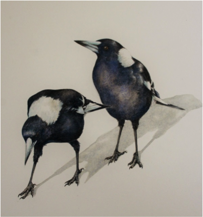 sketching magpies - Google Search