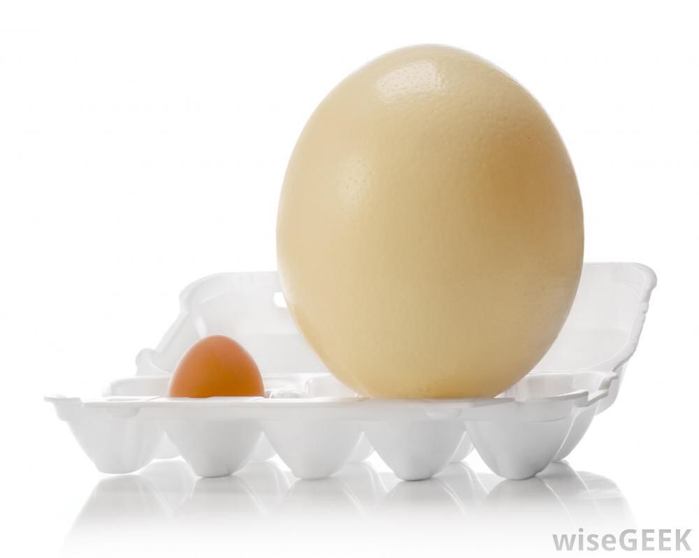 Image from http://images.wisegeek.com/ostrich-egg.jpg.