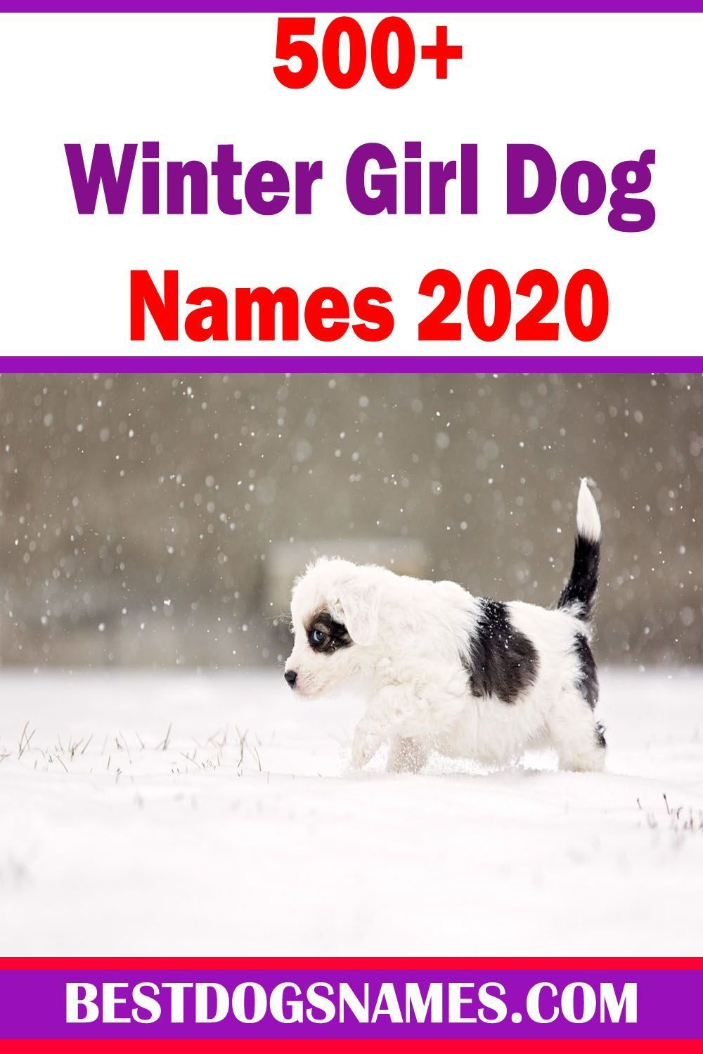 Dog Names Girl Unique Dog Names In 2020 Girl Dog Names Boy Puppy Names Unique Girl And Dog