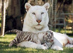 Las Vegas Attraktionen Und Sehenswurdigkeiten Susse Tiere Tiere Wilde Tiere