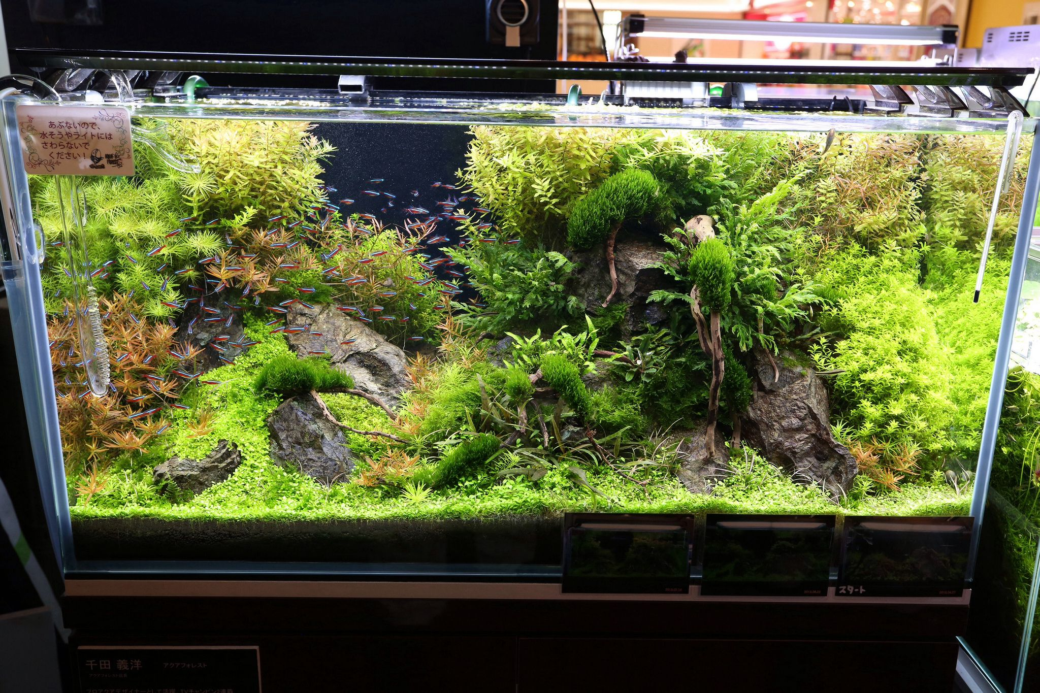 Japan tour aquariums aquascaping and fish