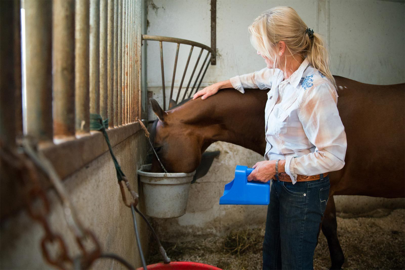 Understanding The Equine Digestive System In