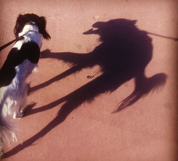 10 Sly Shadows That Are Very Amusing | Funny animal pictures ...