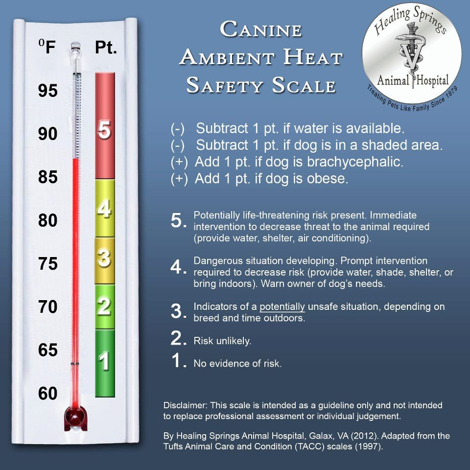 Pin By Animal Health Services On Pet Info Heat Safety Pet