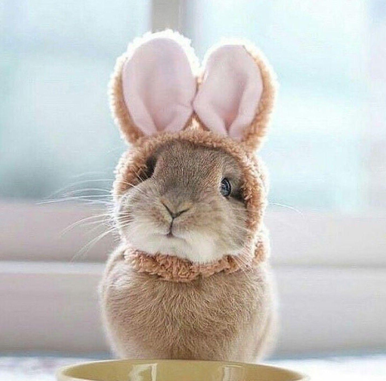 Adorable bunnies porn