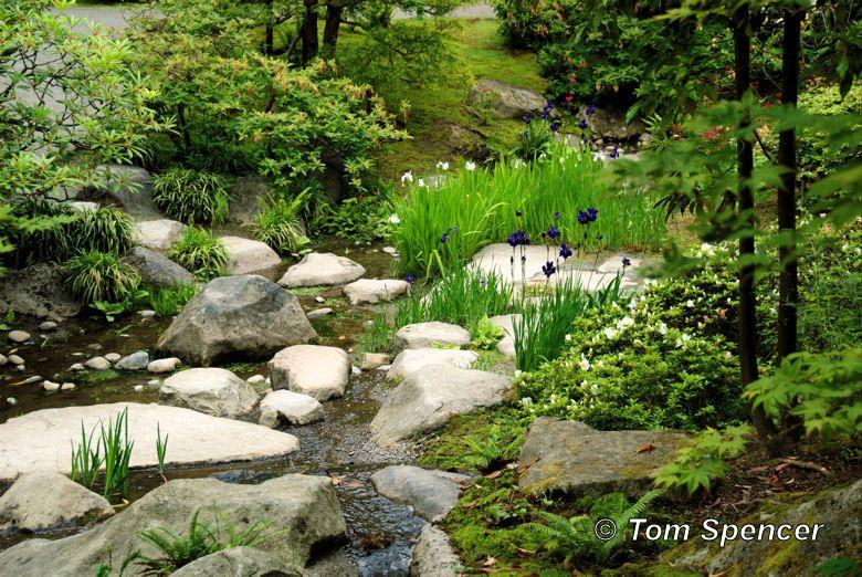 Seattle Japanese Tea Garden Faux Stream Bank