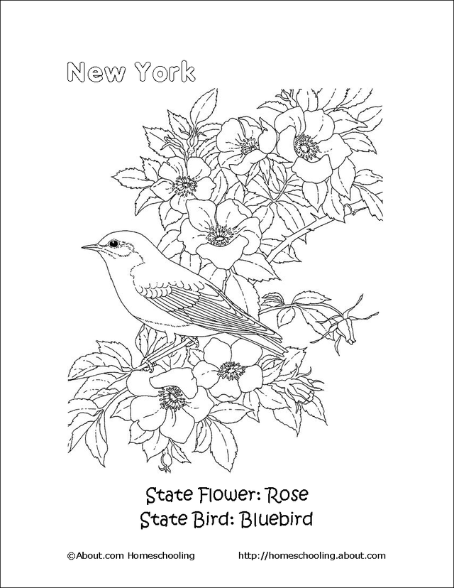 20++ New york state flower coloring page info