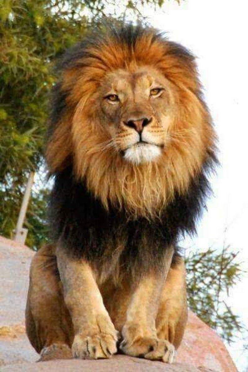 Happy Birthday Month To My Son Leo Animals Animals Wild