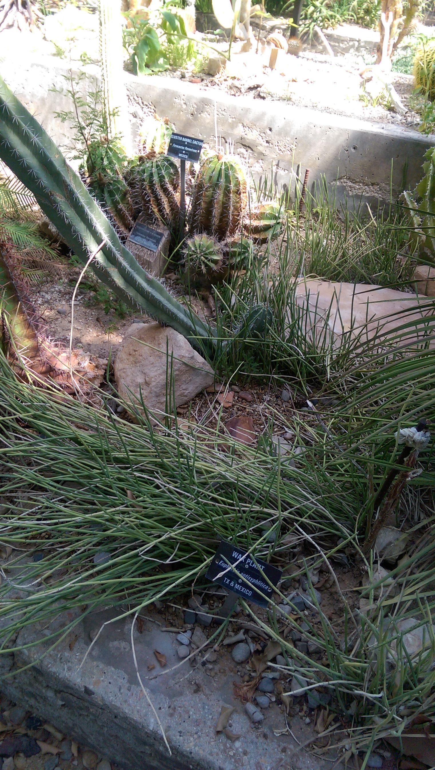 c975e46dd49c5bc35117530f1fe5809d - Living Desert Zoo And Gardens Carlsbad Nm