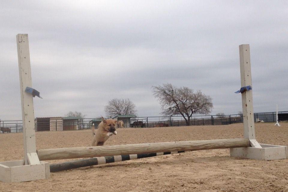 horseingaboutt:  horsesthatmakeuss:  hunter-jump:  orlesbian:  Still the best.  Hey I remember this  so cute  Meeeeeep!