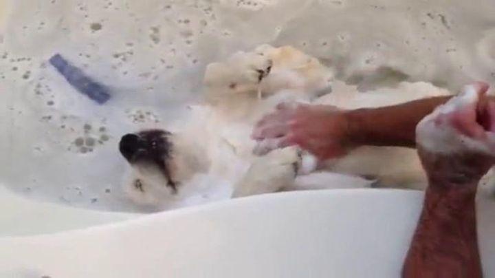 Bagno Cane ~ Dove lavare il cane casa toeletta o lavaggi self service