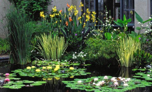 Gartenteich Wasserlilien Kleiner Garten | Moodboard | Pinterest ... Garten Ideen Tropisch Exotisch Bilder