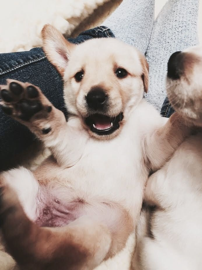 Pin By Lilly H On Puppy Love Puppy Friends Cute Animals Pets