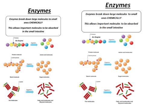 Enzyme Diagram Worksheet & Biotechnology Timeline | Healing Centre ...