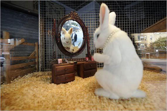 rabbit photo: rabbit This photo was uploaded by deponto_photo