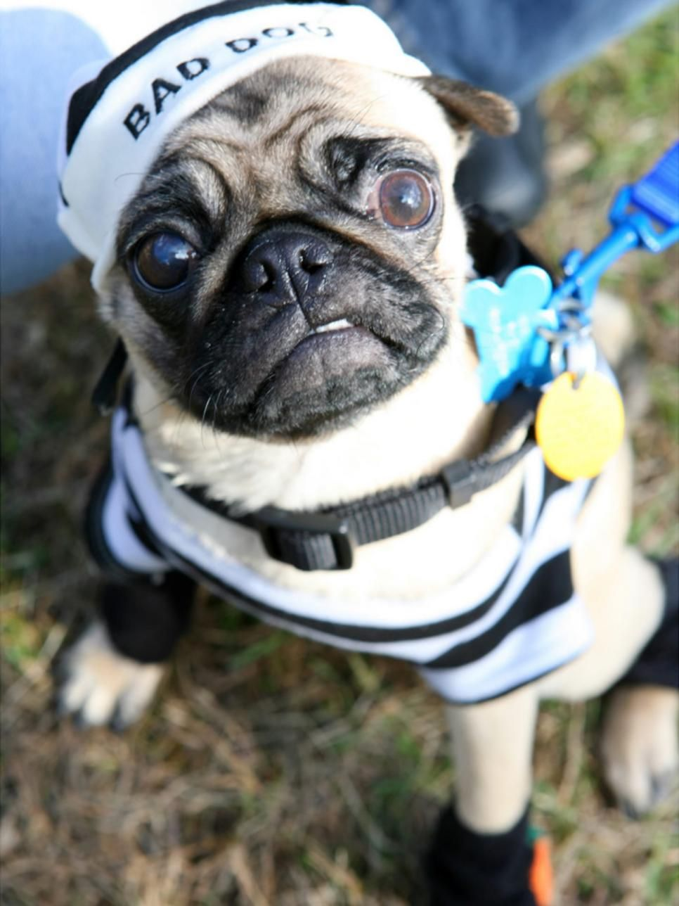 Halloween Costume Ideas For Dogs And Cats Dog Halloween Costumes