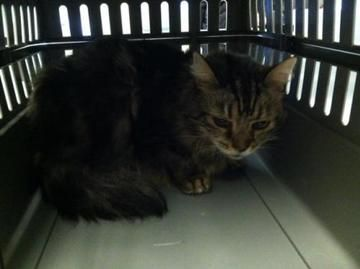 Check Out Lionel S Profile On Allpaws Com And Help Him Get Adopted Lionel Is An Adorable Cat That Needs A New Home Https Www Al Cat Adoption Cute Cats Cats