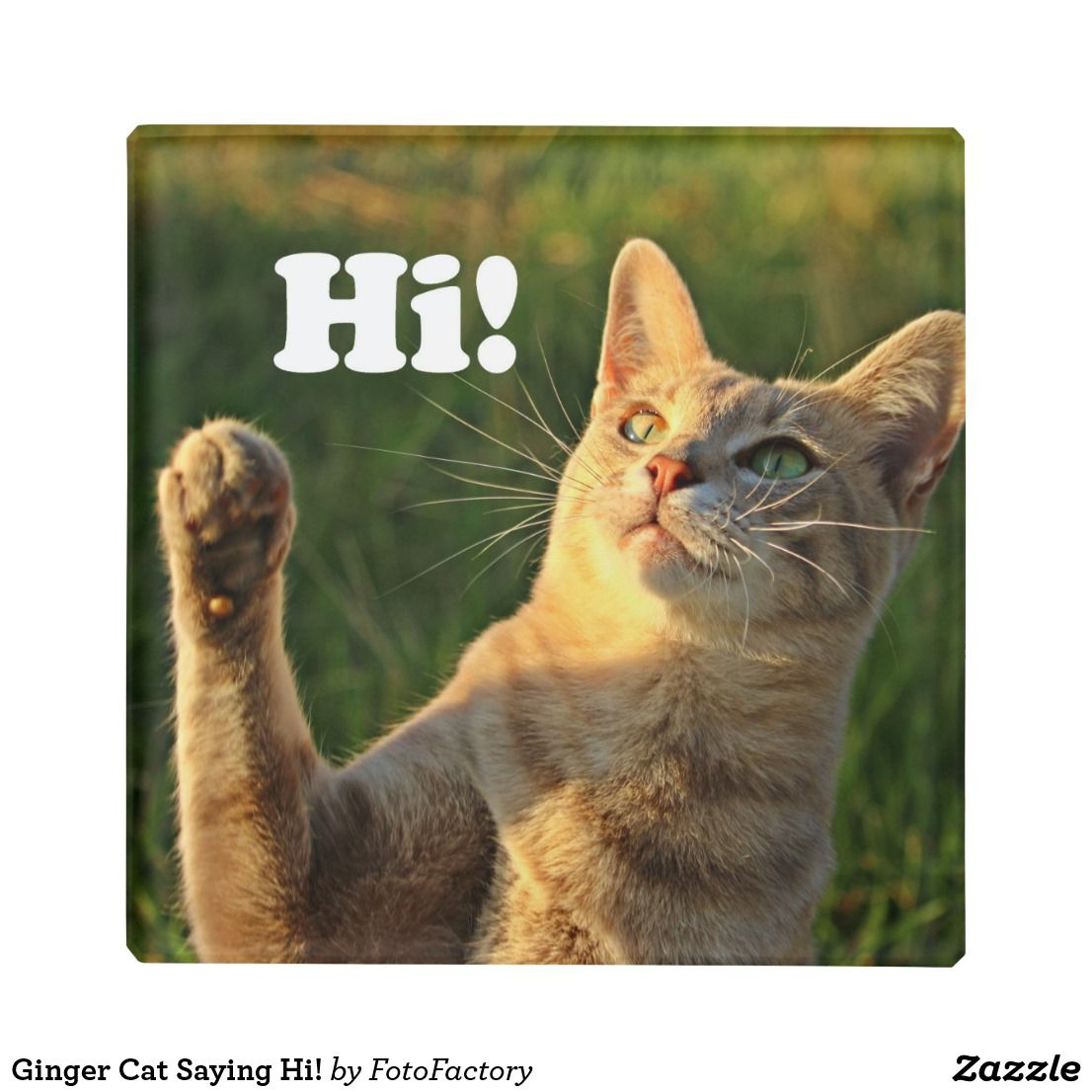 Ginger Cat Saying Hi Glass Coaster Cat Quotes Cats Ginger Cats
