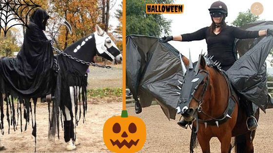 Halloween : Toutes les idées pour le cheval et le cavalier