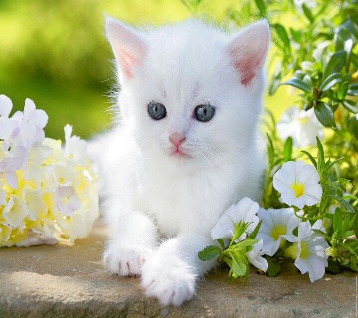 Handsome Beautiful With Images Baby Cats Cute Baby Cats
