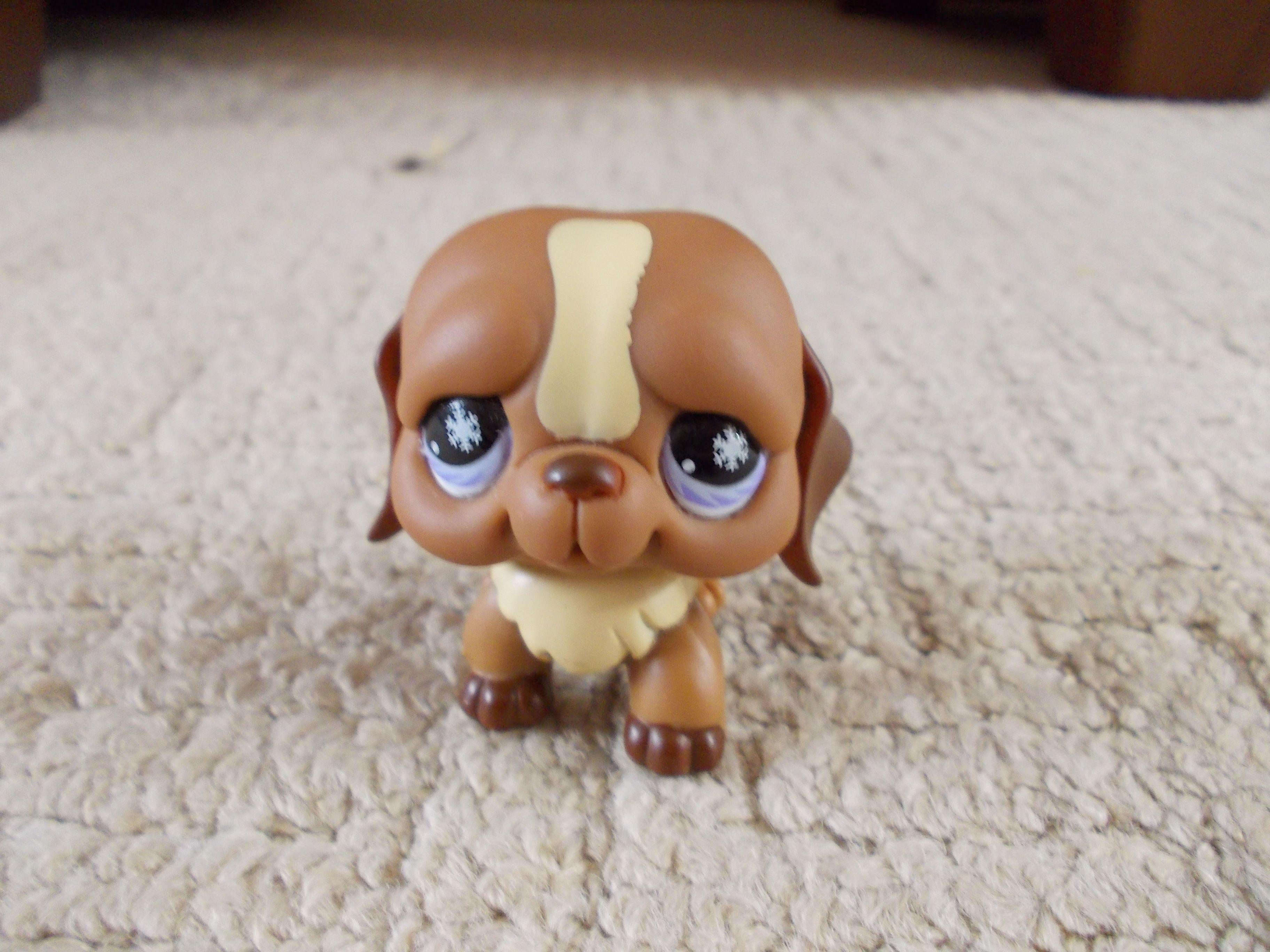 This Is My Littlest Pet Shop Bulldog Little Pets Littlest Pet