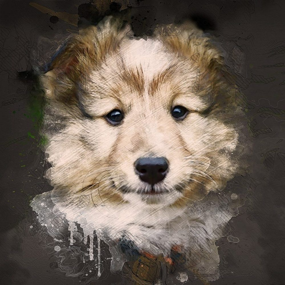 Buy Pet Supplies Online Buy Pets Online Pet Supplies Little Dogs