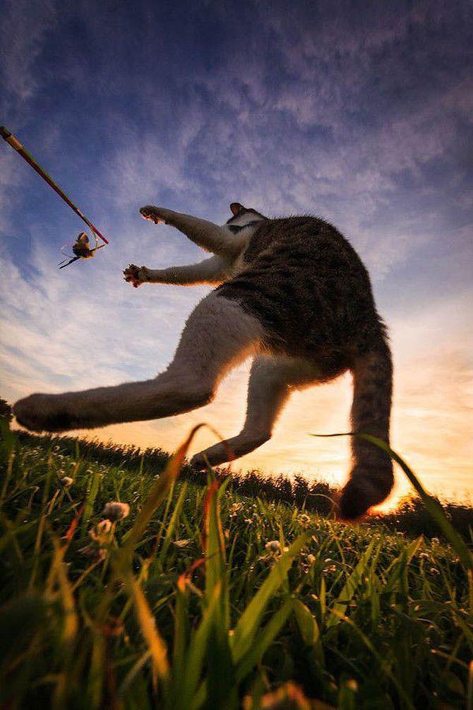 芭蕉blog   気持よさそうに飛んでる猫がスーパー格好いい、間宮誠爾の新作? 30P