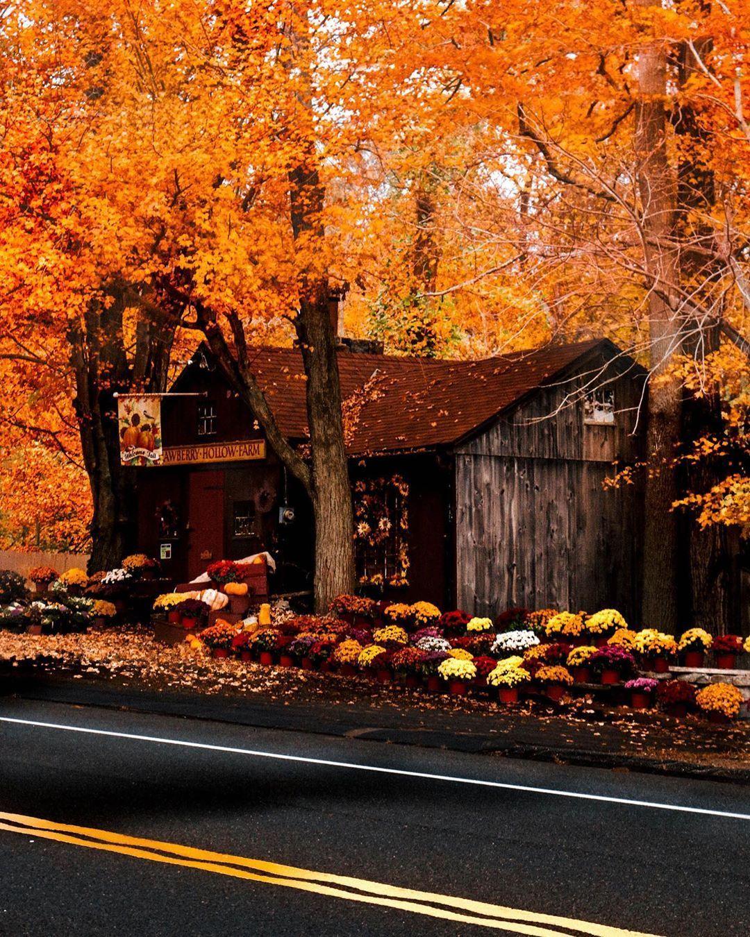AutumnScented31 — autumncozy: Bythecoastalconfidence