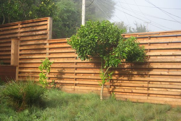 Fences Native Plants Through A Modern Lens At Madrono Fence