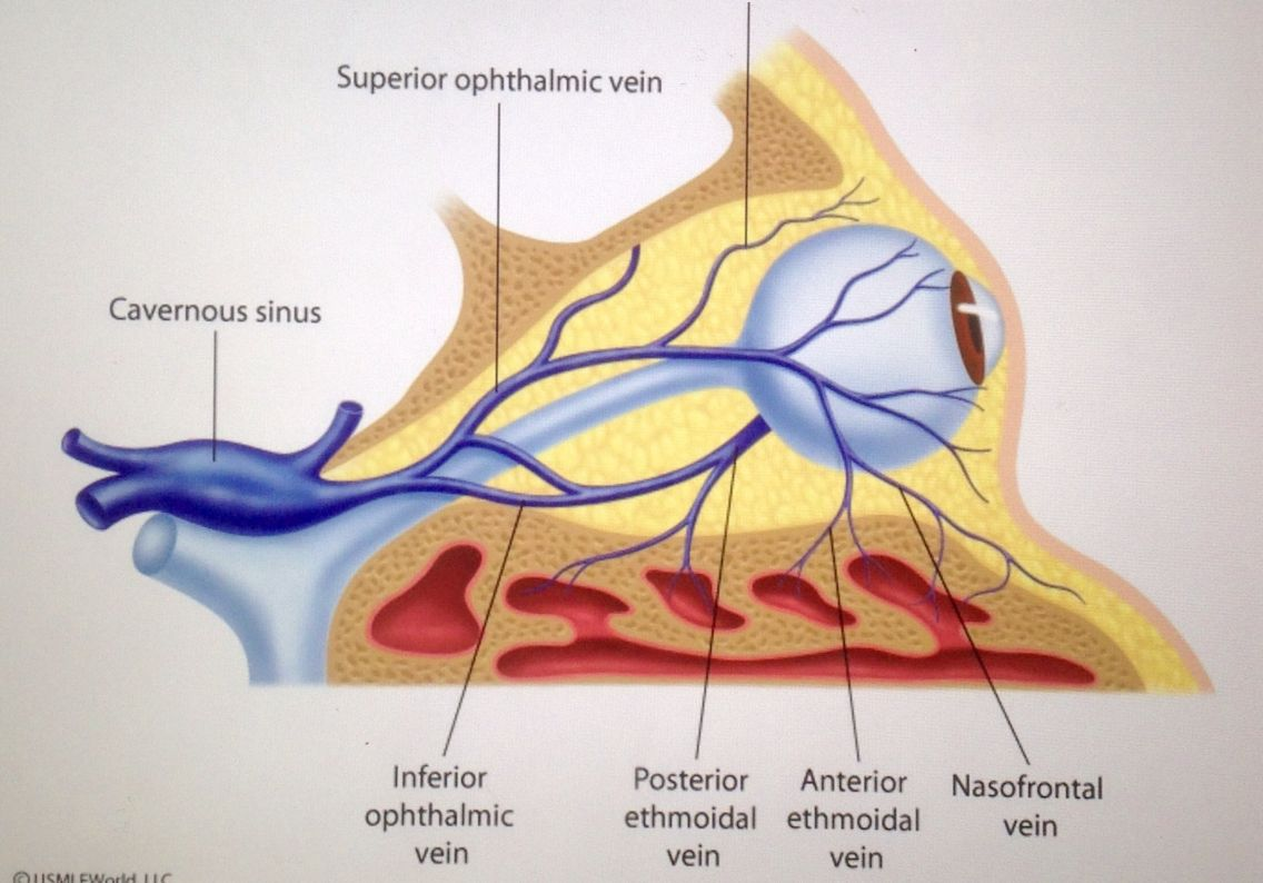 Perfect Cavernous Sinus Anatomy Powerpoint Crest Anatomy And