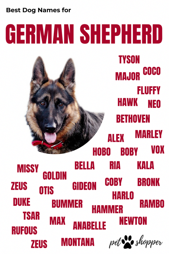 German Shepherd Names Infographic Germanshepherdpuppies German Shepherd Names Dog Names German Shepherd Dogs