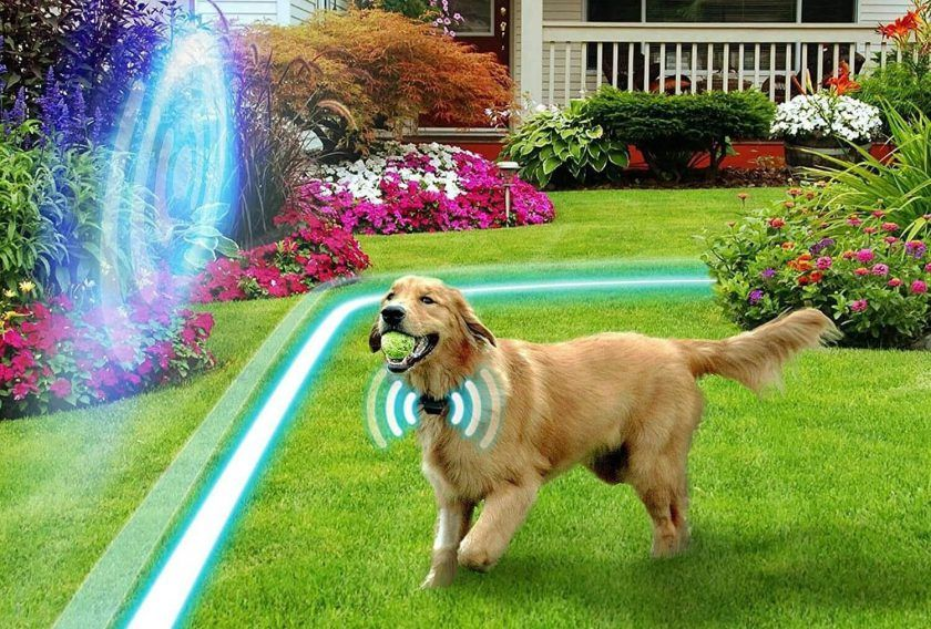 30 Best Wireless Electric Dog Fence 2020 Reviews Updated Guide Wireless Dog Fence Dog Fence Pet Fence