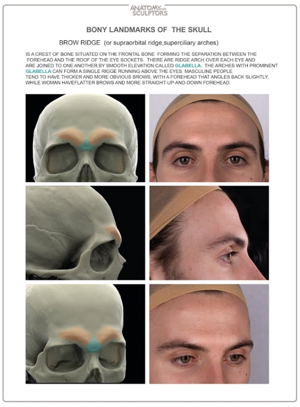 Anatomy Next store - ANATOMY OF FACIAL EXPRESSION (DELIVERY APRIL ...