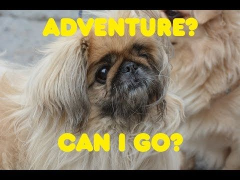 My application for Fjällräven Polar 2014 - Vote and share to let me go on an adventure:)