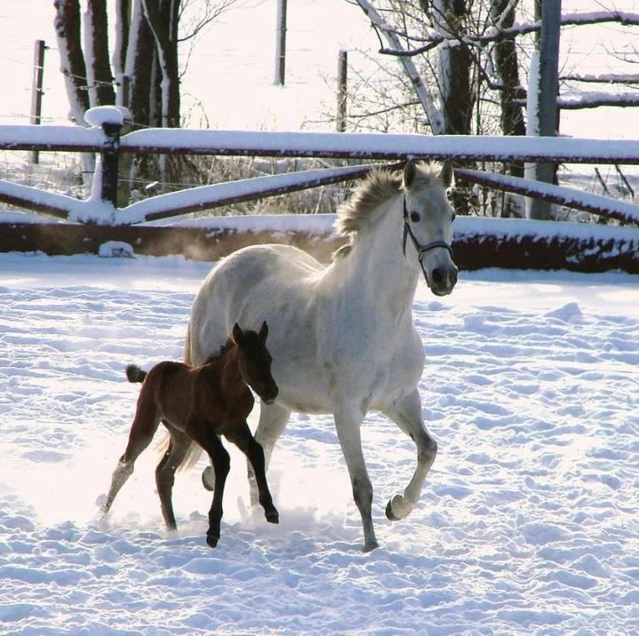 4shared View All Images At أجمل خيول العالم صور Folder Horses In Snow Horses Beautiful Horses